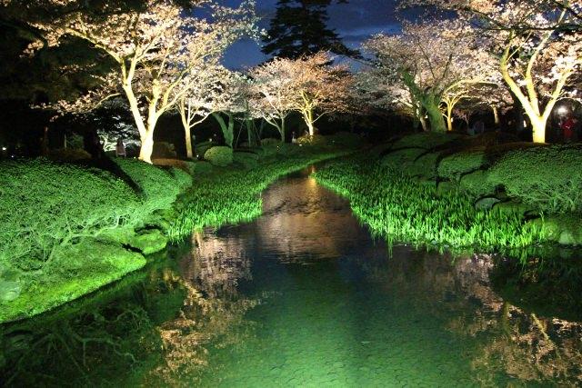 兼六園ライトアップ春桜